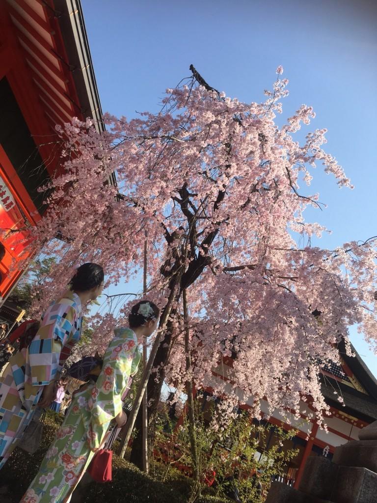 学生さん❣春休みに着物で京都の桜を満喫♪2018年3月28日2