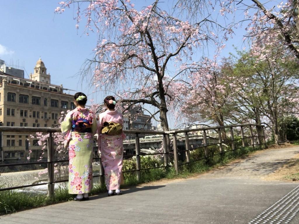 学生さん❣春休みに着物で京都の桜を満喫♪2018年3月28日4