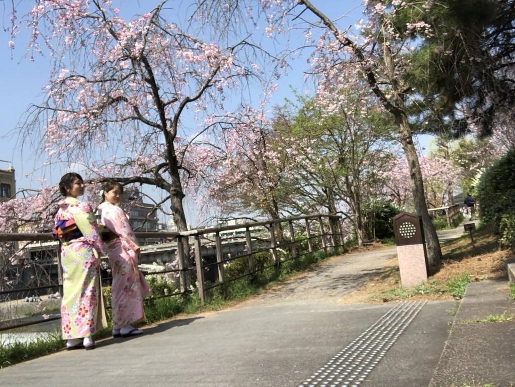 学生さん❣春休みに着物で京都の桜を満喫♪2018年3月28日5