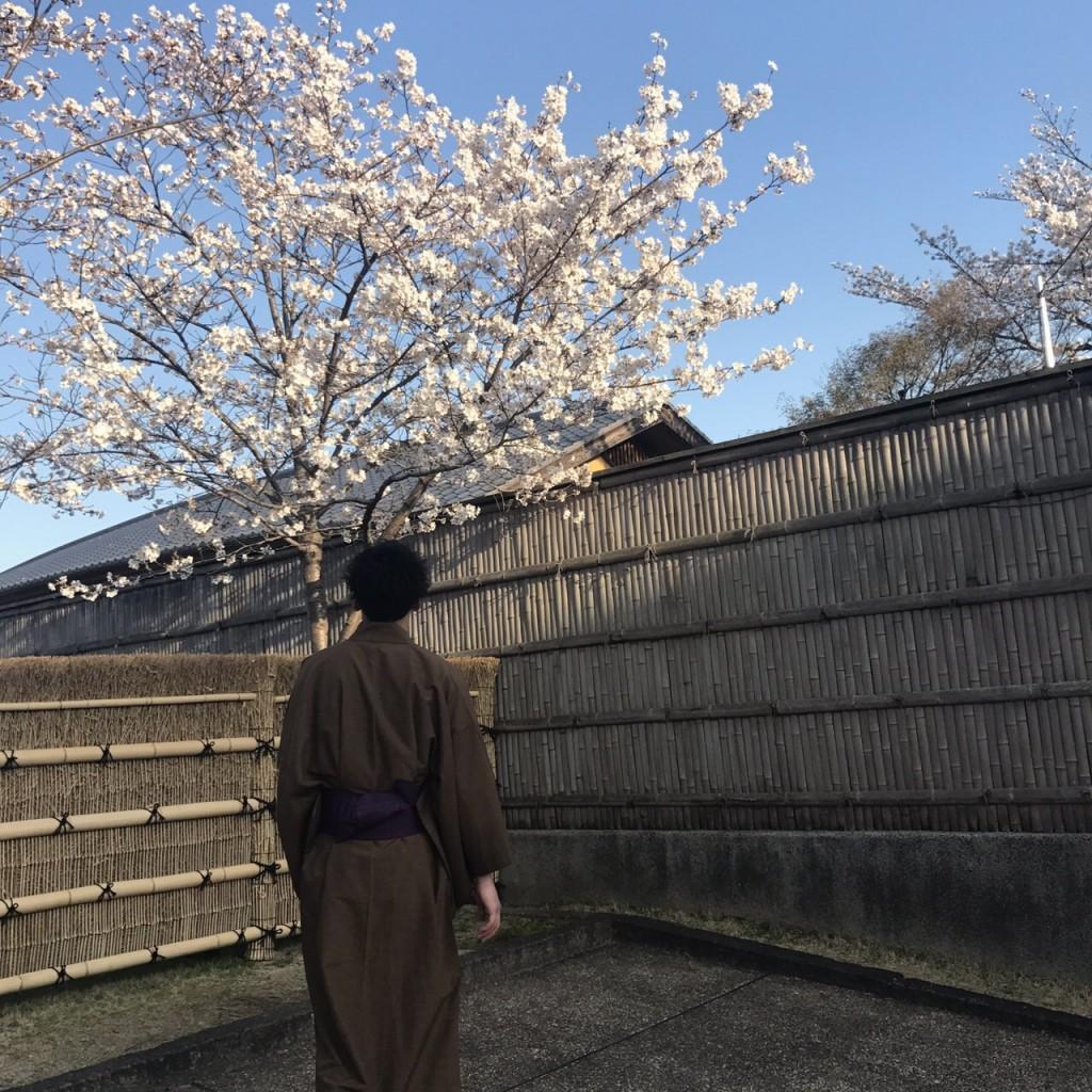 学生さん❣春休みに着物で京都の桜を満喫♪2018年3月28日15