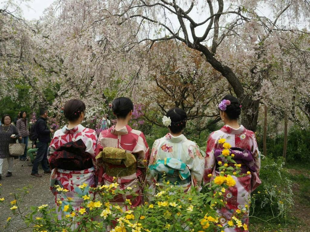 原谷苑まだ桜ありま~す❣2018年4月14日4