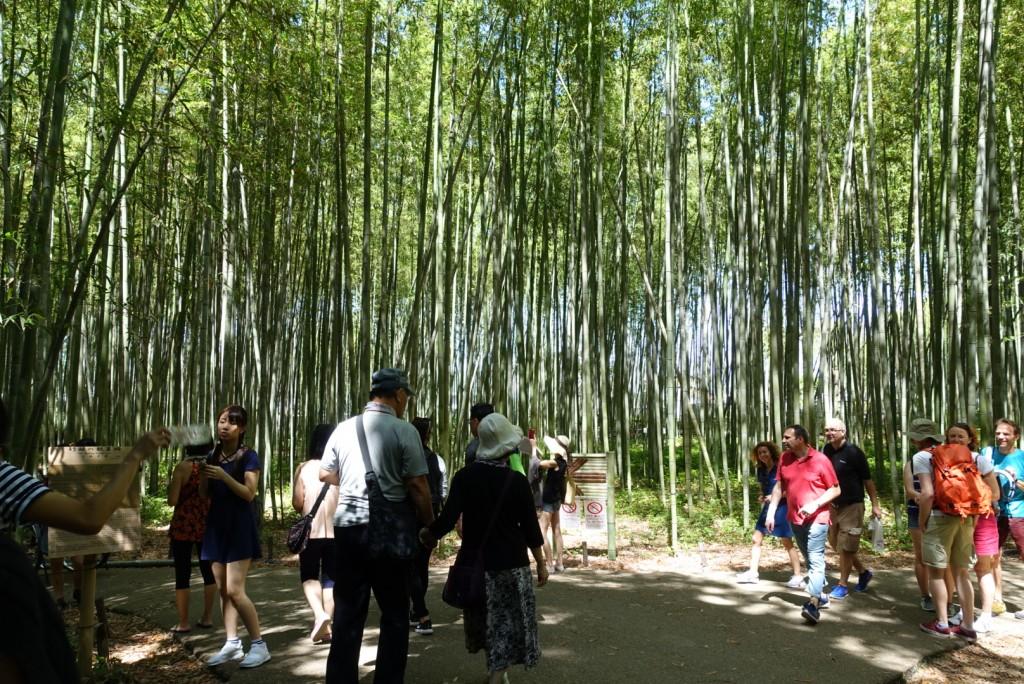 嵯峨嵐山「竹林の散策路」1