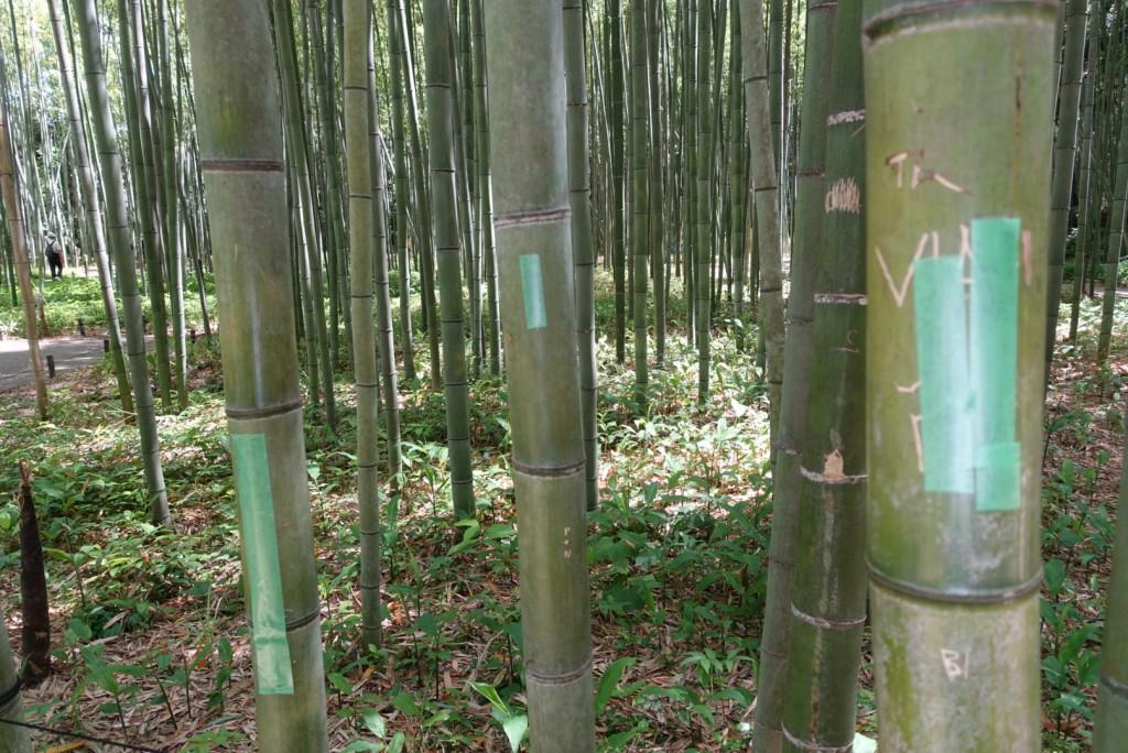 嵯峨嵐山「竹林の散策路」4