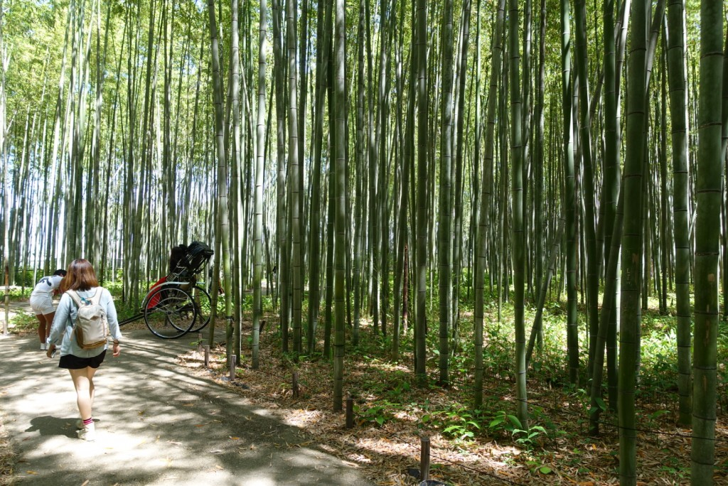 嵯峨嵐山「竹林の散策路」3