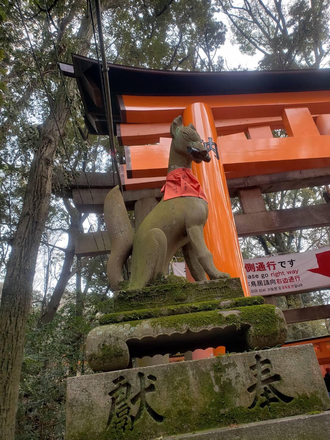 今日は嵐山と伏見稲荷大社が人気でした♡2019年2月7日7