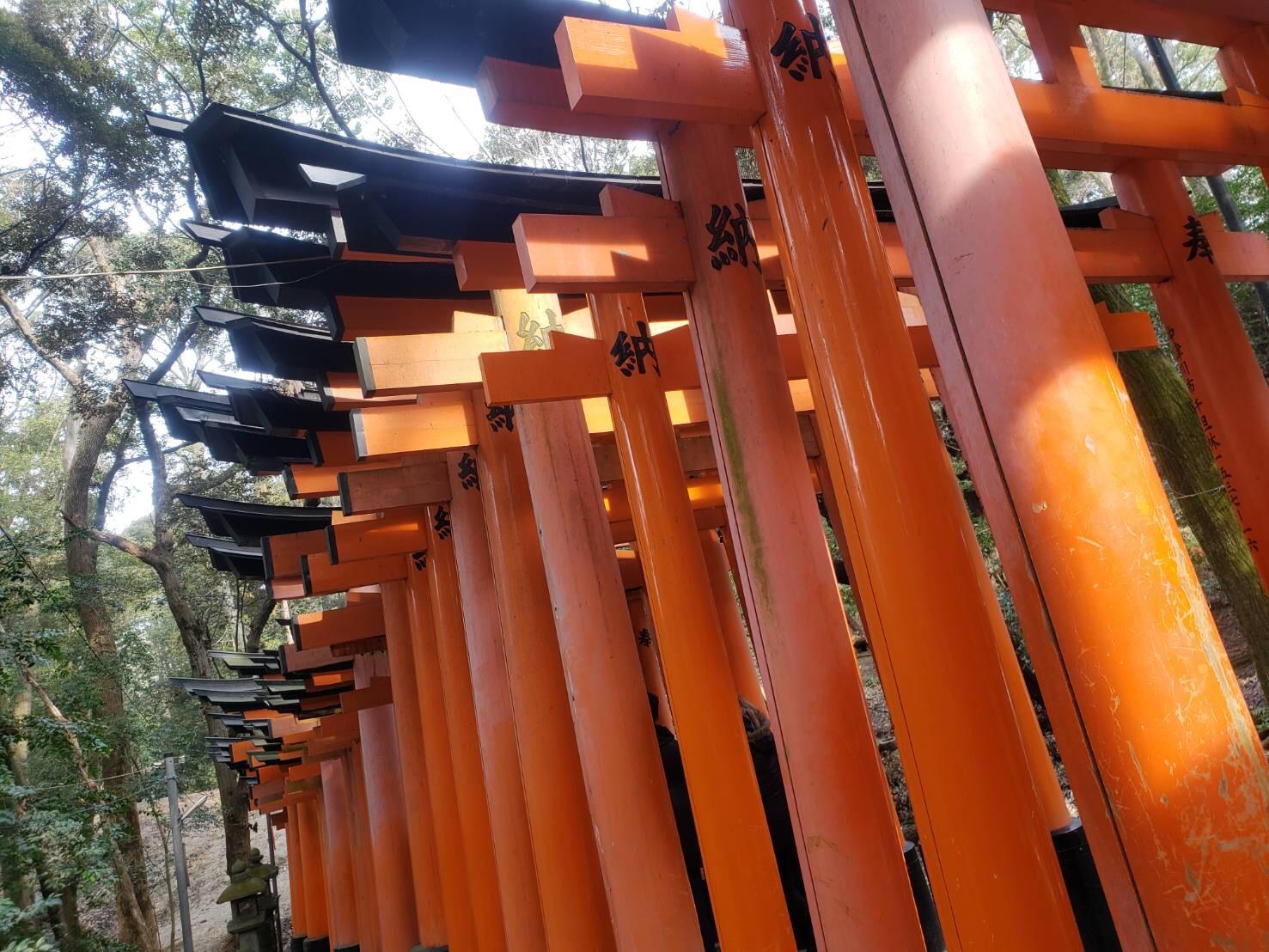 今日は嵐山と伏見稲荷大社が人気でした♡2019年2月7日8