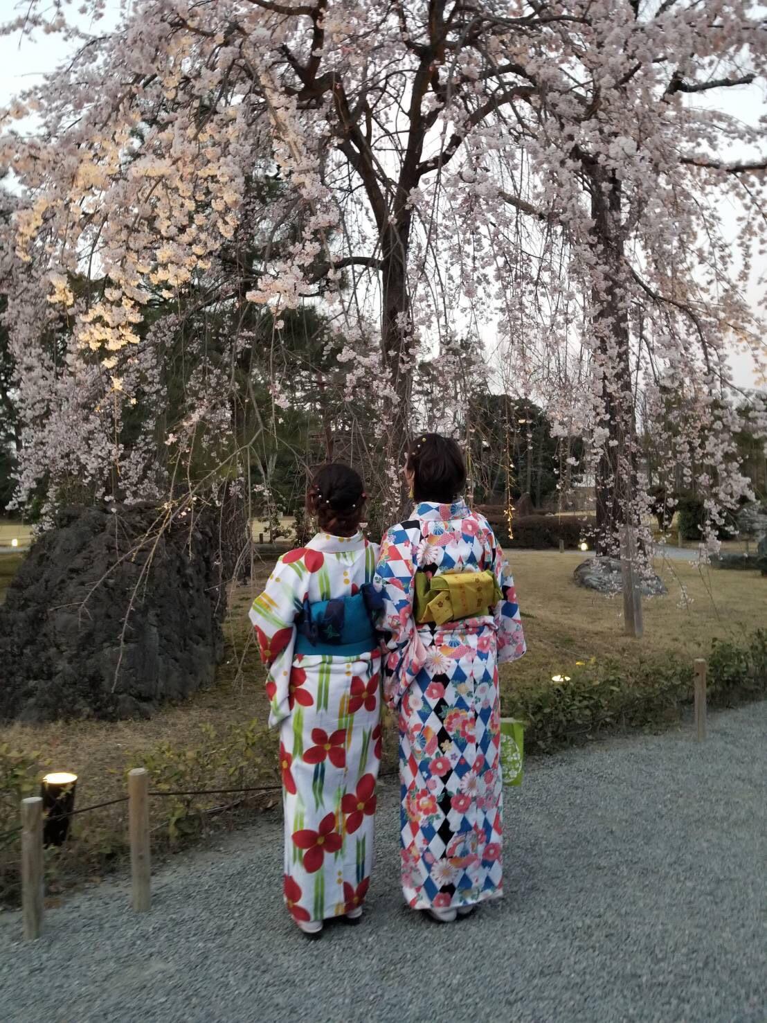 リピーター様❣平野神社でお花見2019年3月29日3