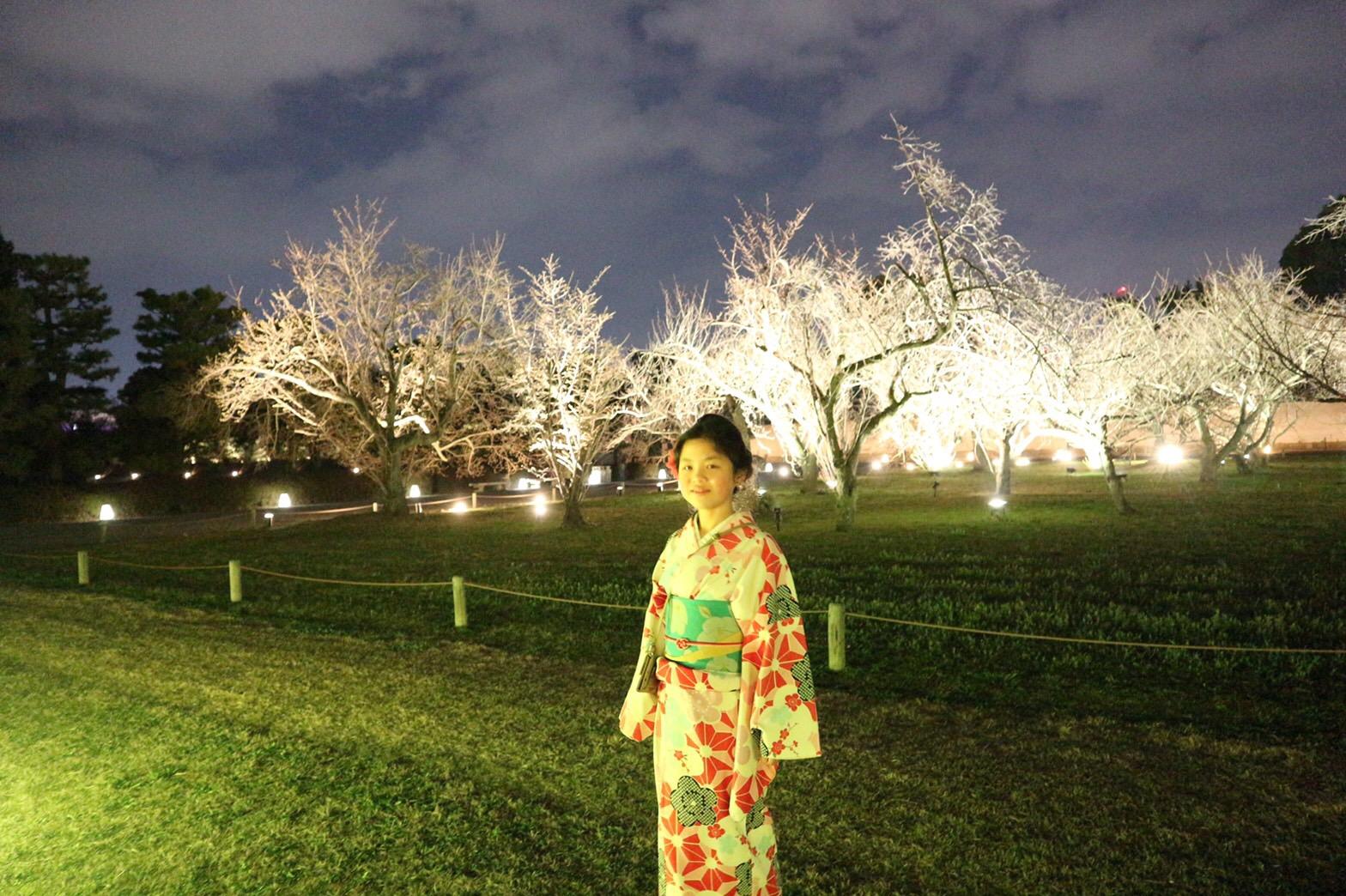 二条城桜まつり2019ライトアップ2019年3月22日5
