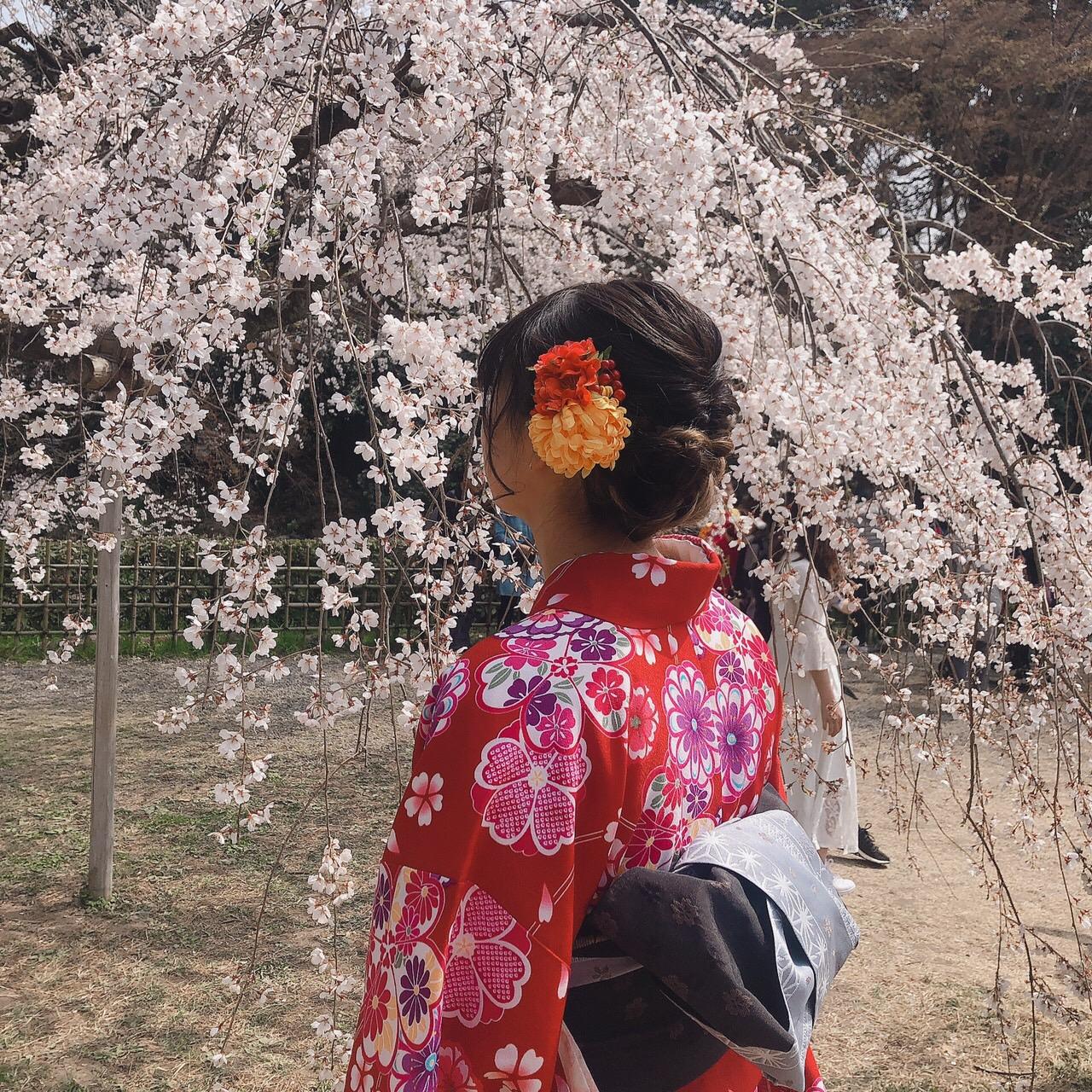 リピーター様❣平野神社でお花見2019年3月29日2