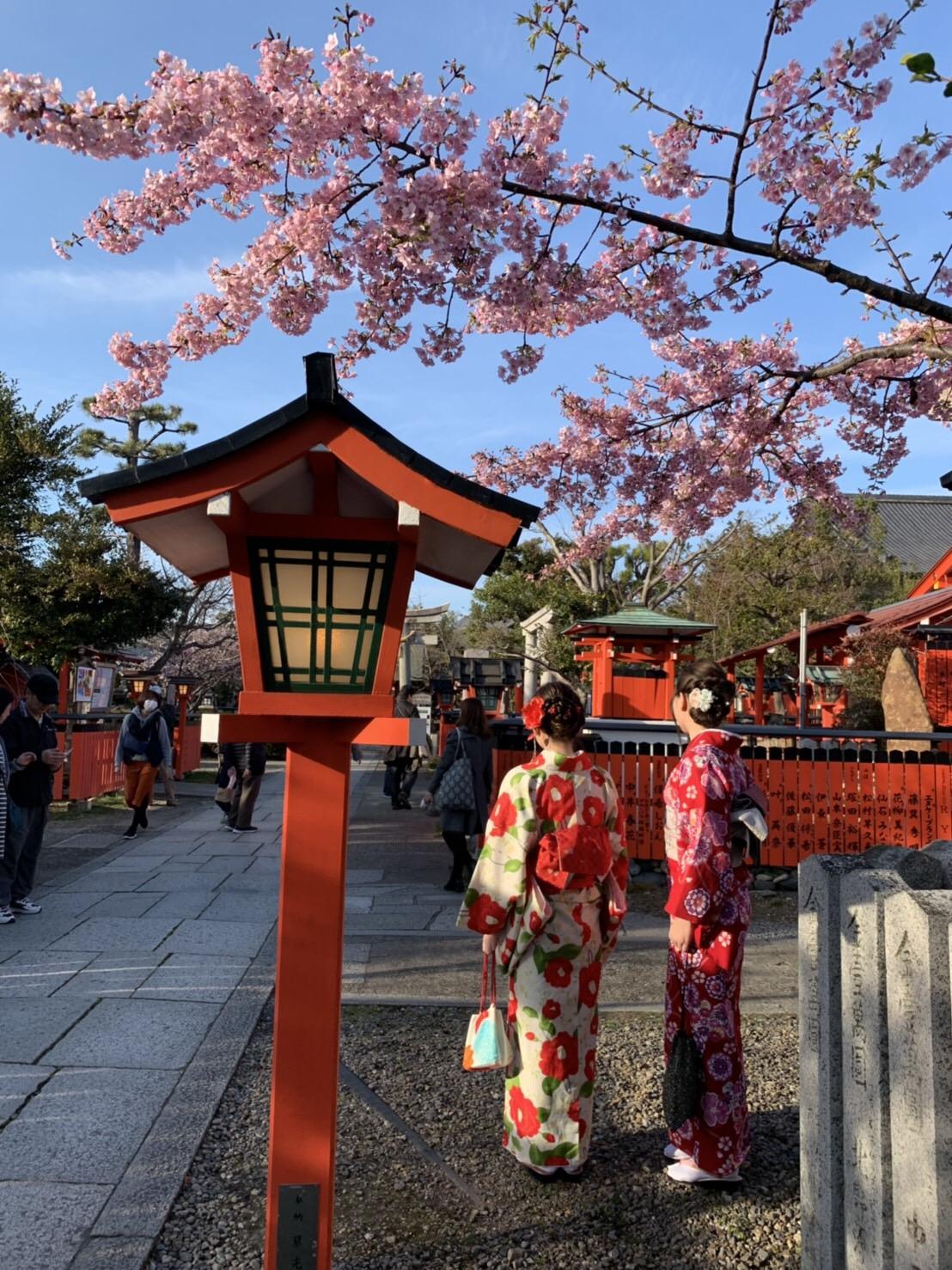 高台寺も春の特別夜間拝観始まってまぁす2019年3月9日3
