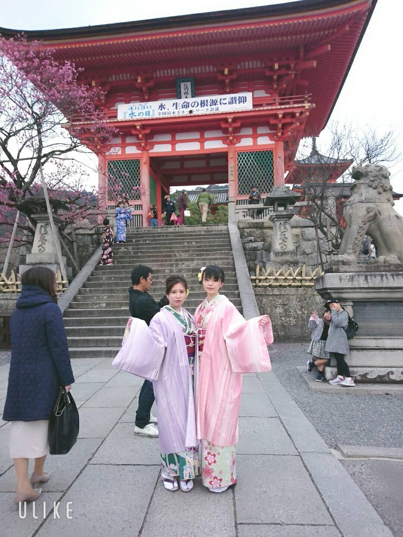 二条城桜まつり2019ライトアップ2019年3月22日15