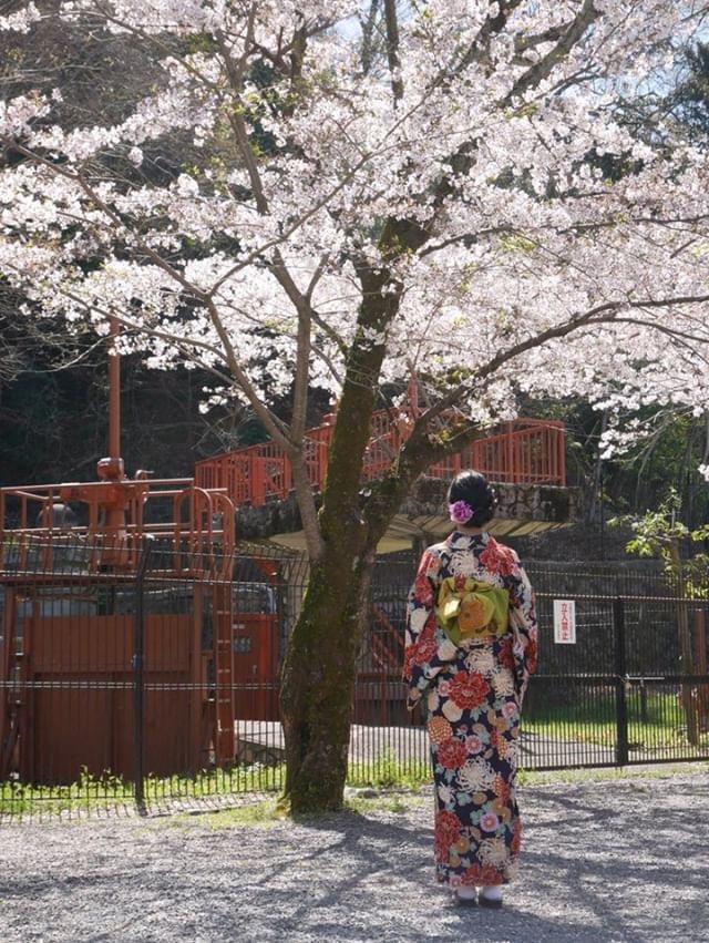 週末に京都で着物レンタル♪2019年4月13日8