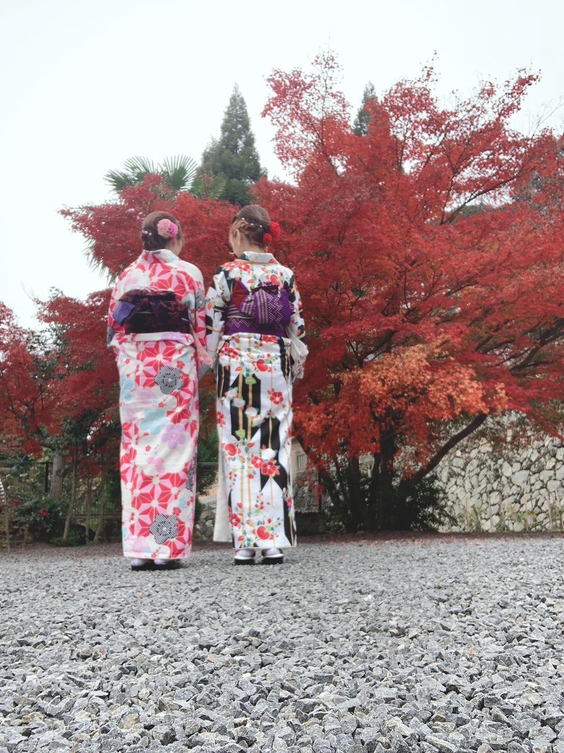 京都は紅葉見頃で~す2019年11月24日9