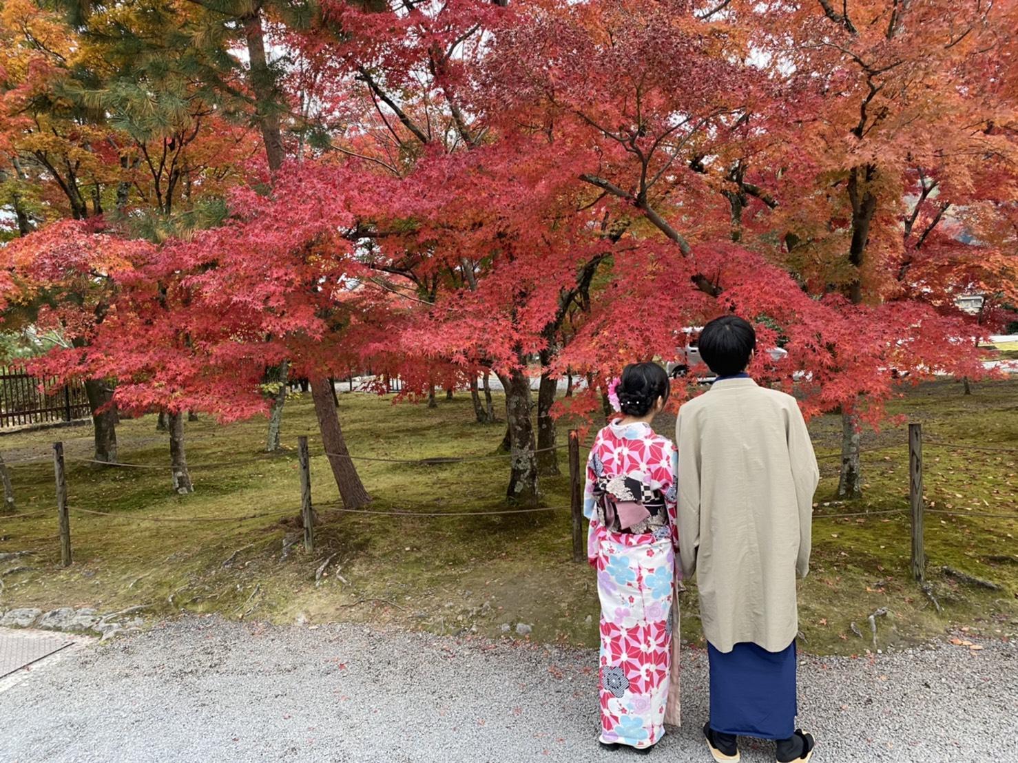 京都は紅葉見頃で~す2019年11月24日2