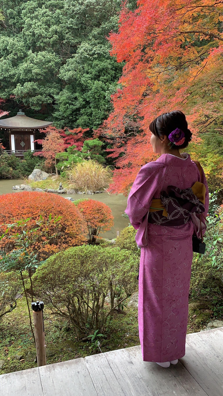 京都は紅葉見頃で~す2019年11月24日5