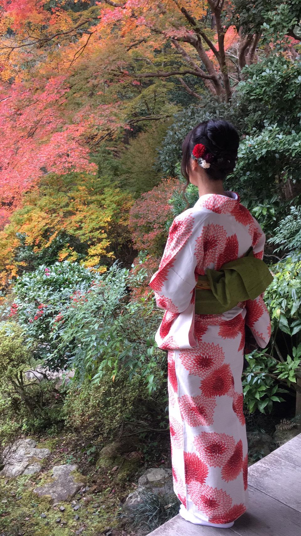 京都は紅葉見頃で~す2019年11月24日4