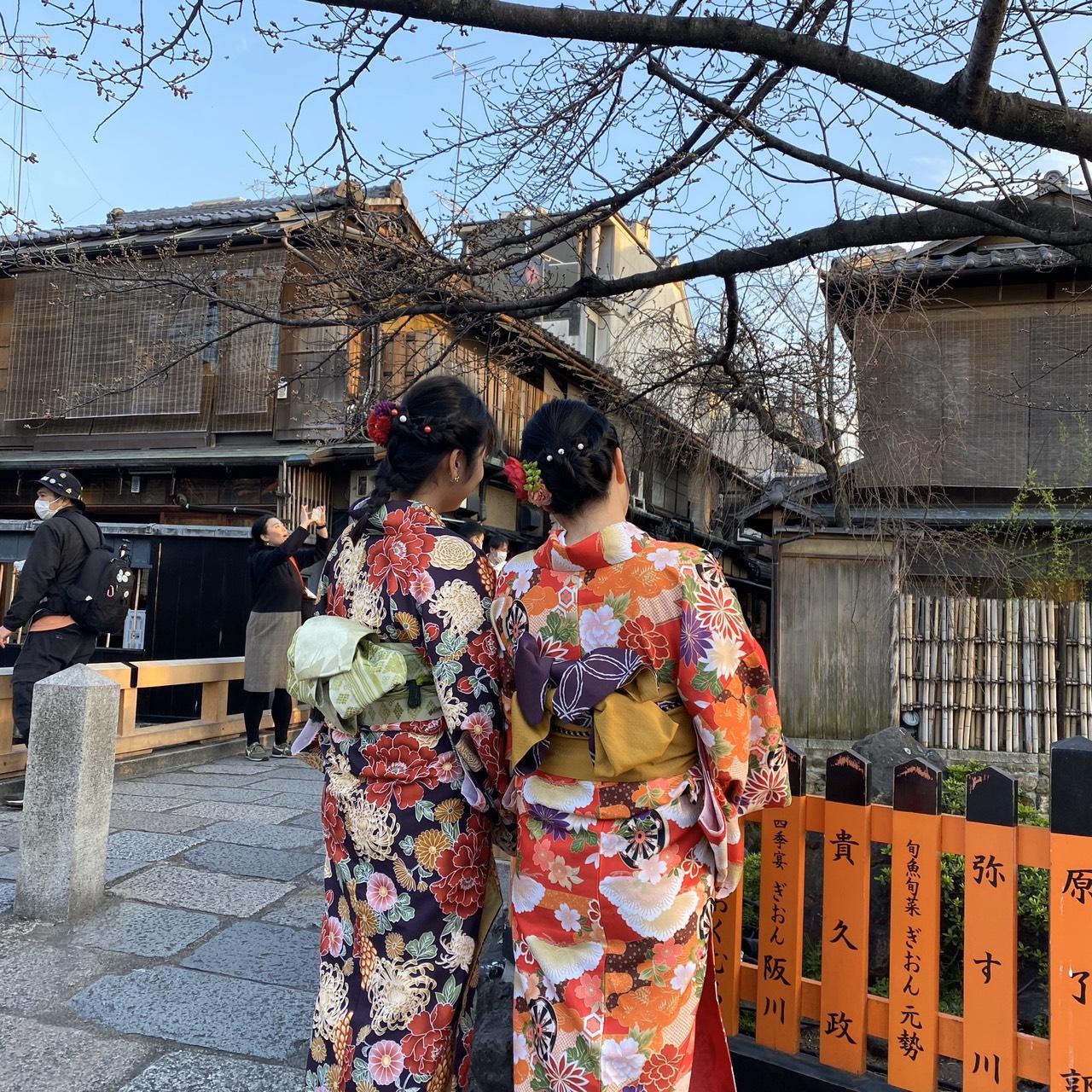 二条城桜まつり2020!着物の方は入城無料2020年3月21日5