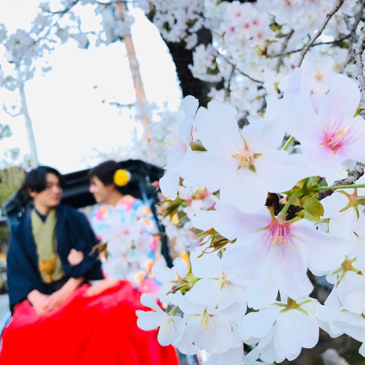 蹴上インクラインも桜咲いてきましたぁ♪2020年3月25日10