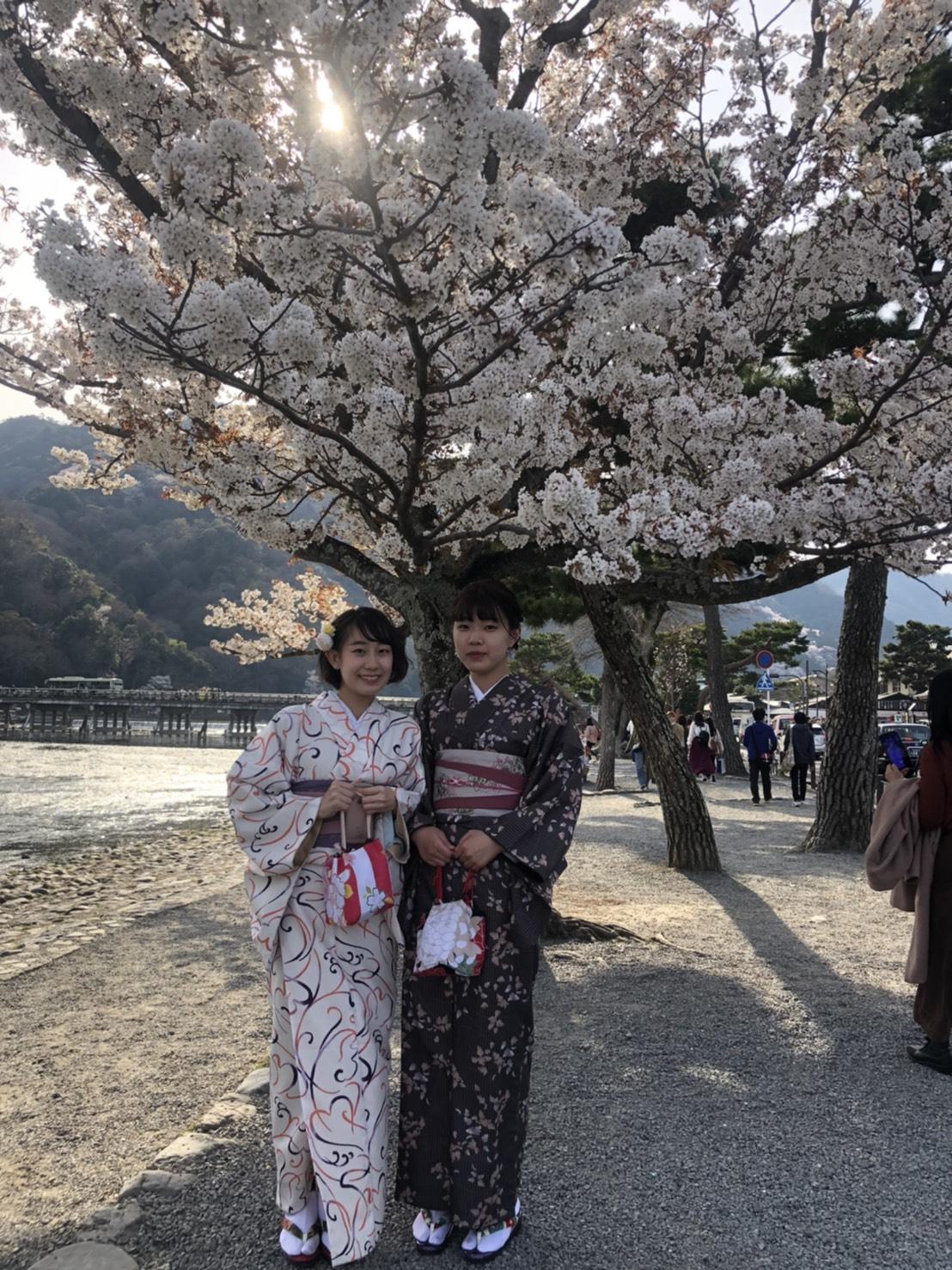 「東寺 夜桜ライトアップ」開催中2020年3月26日9