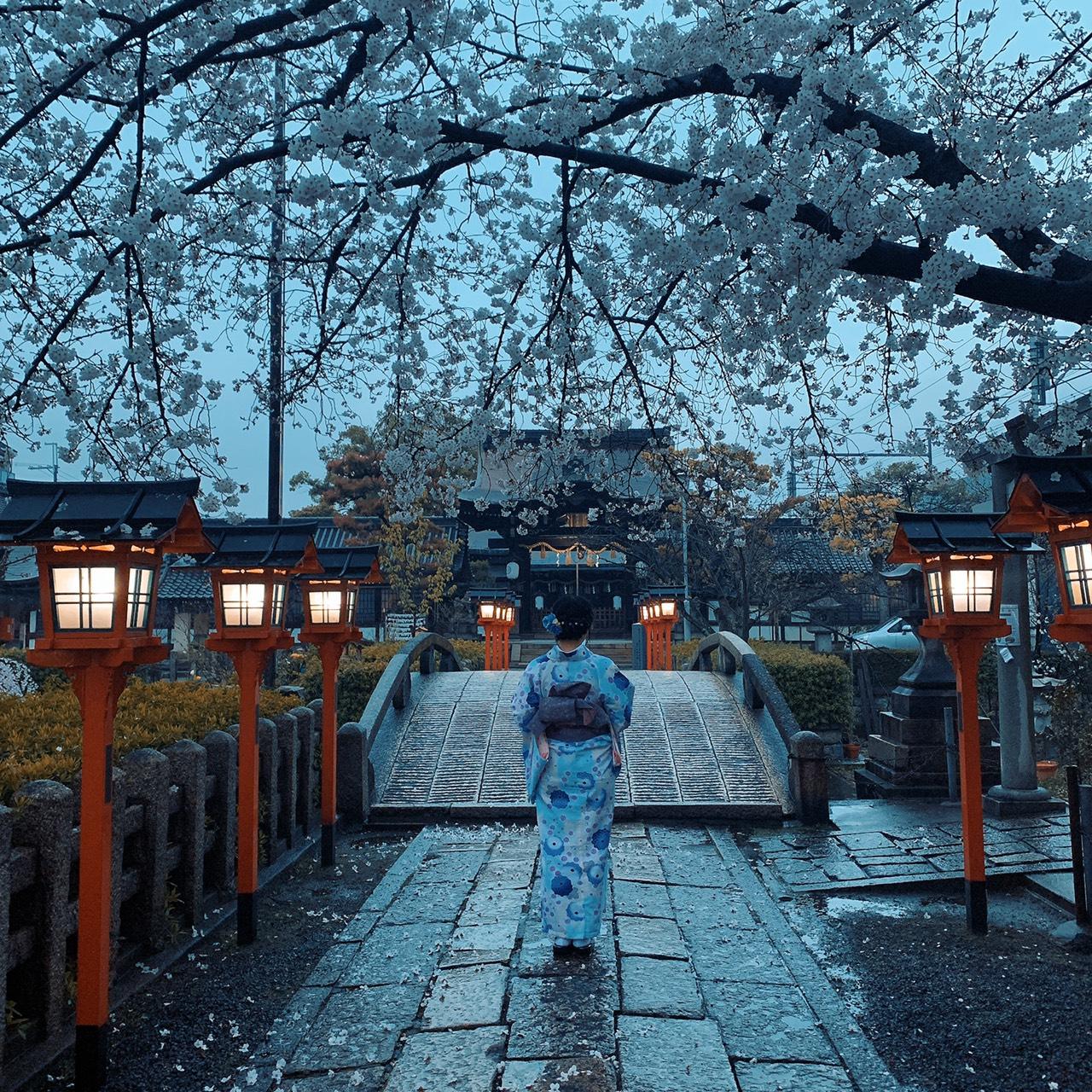 雨と桜と京都2020年3月27日7