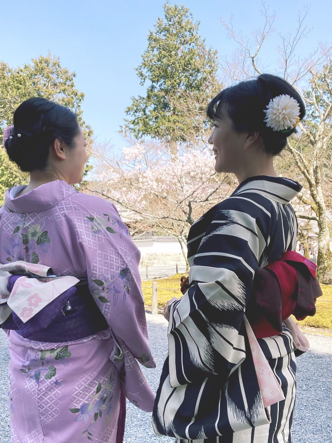 二条城桜まつり2020!着物の方は入城無料2020年3月21日1